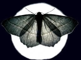 farfalla nella notte