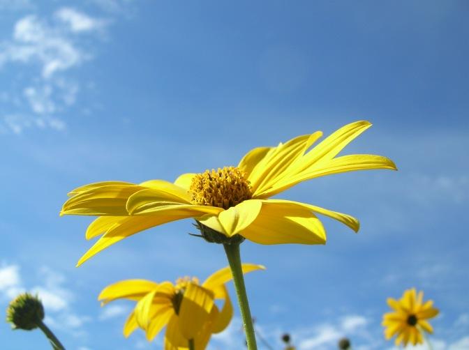 fiore-giallo