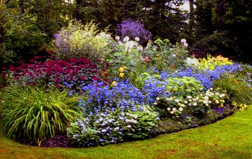 Fiori perenni da bordura piante da giardino con fiori con for Piante da aiuola