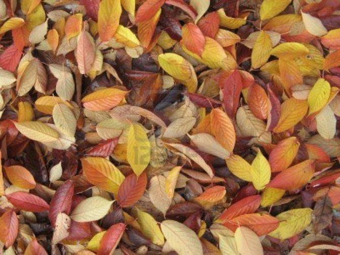 tappeto-di-foglie-autunnali