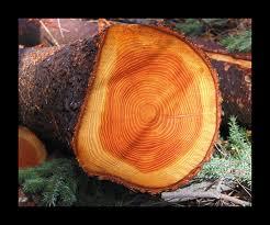 anelli del tronco