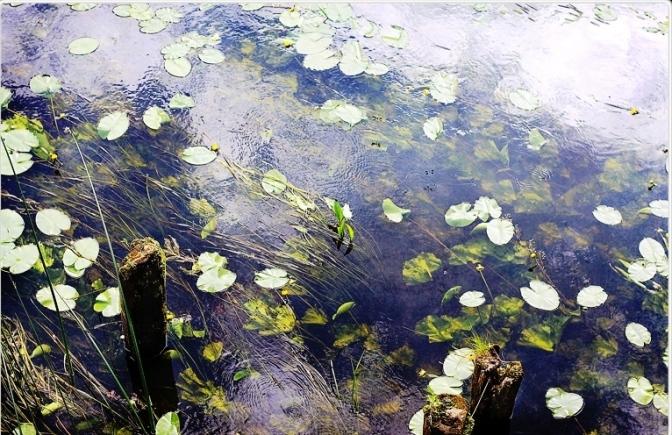petali_sull_acqua