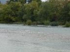 Lungo il fiume, tra gli alberi
