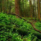 Il bosco è vita