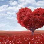 Il cuore, non per cardioghirurghi