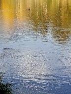 Questo fiume in piena
