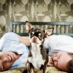 La generazione dei cani