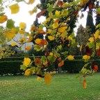 Quale volto ha l' autunno?