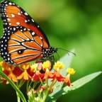 Iris e la farfalla, una storia di libertà