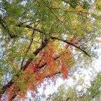 Volti d'autunno