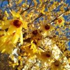 I pallidi fiori appena sbocciati